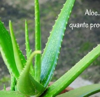 Aloe: le sue numerose proprietà